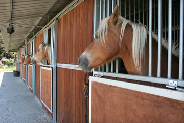 caballo 02
