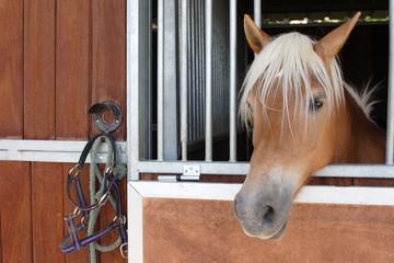 caballo 01