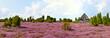 Leinwanddruck Bild - Heidschnuckenstall in der Heide