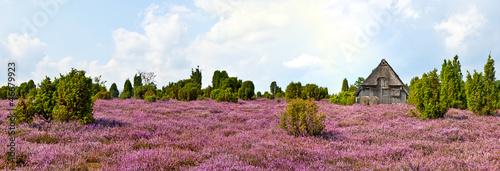 Leinwandbild Motiv Heidschnuckenstall in der Heide