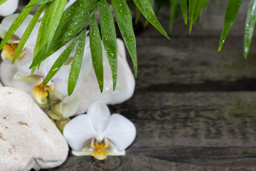 Palm and orchid on wooden boards spa background