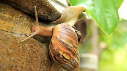 Snail climb trees Part6