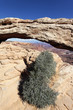 vertical view of Mesa Arch