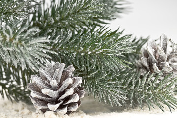 snow-covered fir branches and cones
