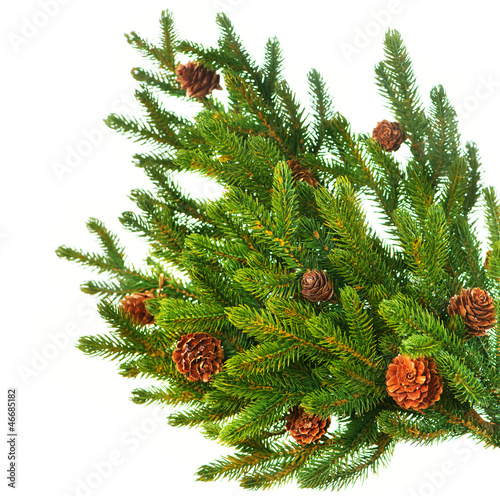 Christmas Tree Branch with Cones border isolated on a White