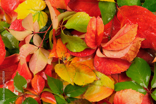 Fall - autumn leaves