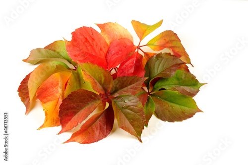 Fall - autumn leaves isolated on white background