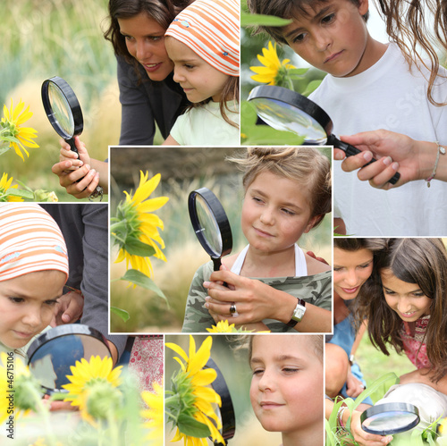 Montage of kids examining sunflowers