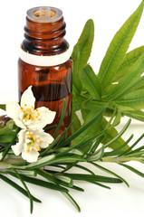 Plantes médécinales et huile essentielle
