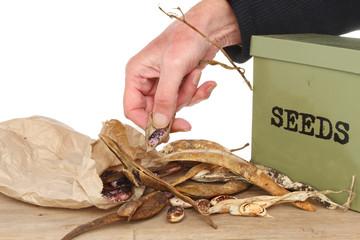 Saving seed