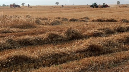 working in the field of wheat harvester background  bale machine