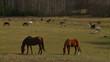 stado koni na rancho