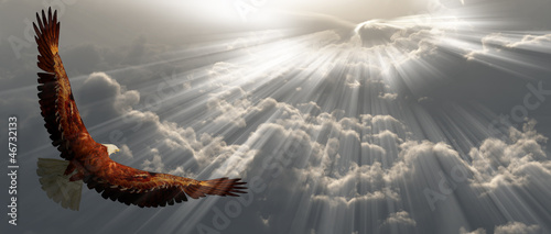 Eagle in flight above the clouds