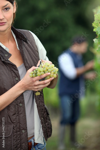 Gardener with bunch of grapes
