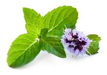 """Постер, картина, фотообои """"Leaf of mint with flower"""""""