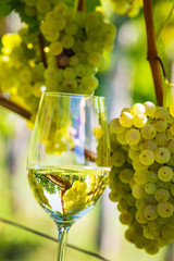 Weinglas im Weinberg