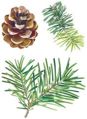Branches de sapin et pomme de pin
