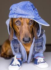 Dog in cotton cap