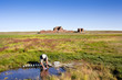 Collecting water in the gobi desert