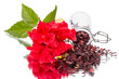 Red flower and hibiscus tea on white