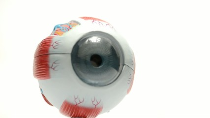 Human eye model tool for anatomic medical students