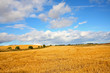 Scenic landscape with fields of wheat