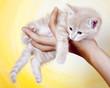 Katzenbaby auf der Hand