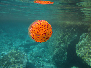 Orange Jellyfish Underwater