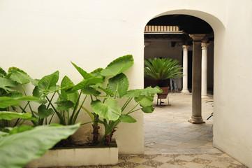 grünpflanzen im hof