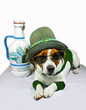 Jack-Russel-Terrier am Oktoberfest