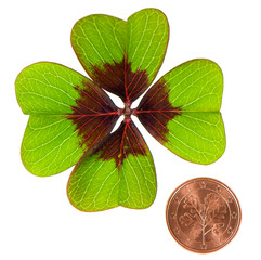 coin and shamrock leaf on white