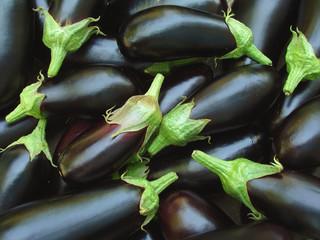 eggplants harvest