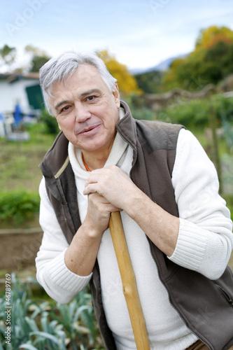 Senior man cultivating vegetables in kitchen garden
