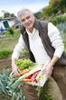 Senior man in kitchen garden carrying box of vegetables