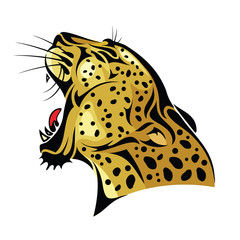 Leopard head on white background