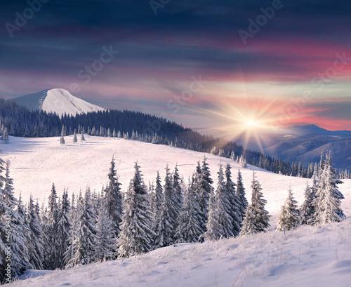 drzewa-pokryte-szronem-i-snieg-w-gorach