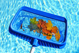 Skimming leaves from pool