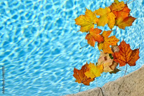 Fall leaves floating in pool © Elenathewise