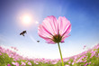 bee and pink daisies on the sunlight background