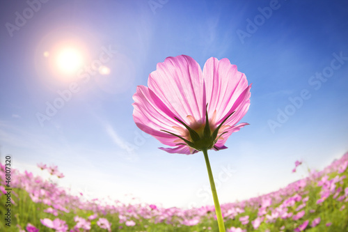 canvas print picture beautiful daisies on the sunlight background