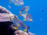 Fototapete Aquarium - Schranke - Fische