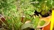 Herbs Hierbas 허브