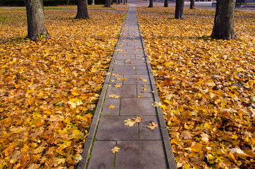 autumn concrete track in park