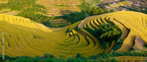 terraced rice field in sunshine