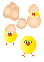 Chicks and eggs illustration