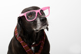 black dog with pink glasses