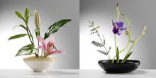 Próbki ikebana dwa japońskie