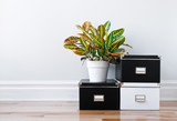 Fototapety Storage boxes and green plant in a room