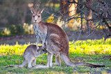kangaroo and child