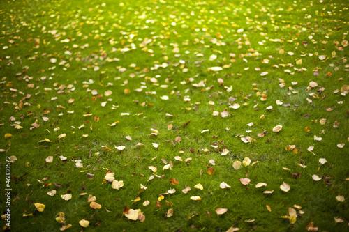 Automne, pelouse, gazon, jardin, feuilles, jardinage